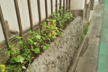 2018年夏 事務所植木