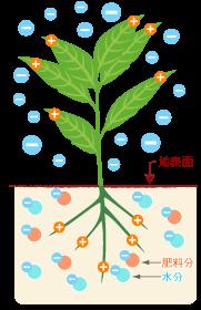 地磁場と植物